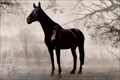 [img]http://horsesclub.ucoz.ru/_ph/11/2/287524463.jpg[/img]