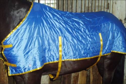 [img]http://horsesclub.ucoz.ru/_ph/11/2/446327649.jpg[/img]